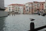Canal Grande (Venice)