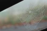 Spider web and dew (Rothenburg ob der Tauber)
